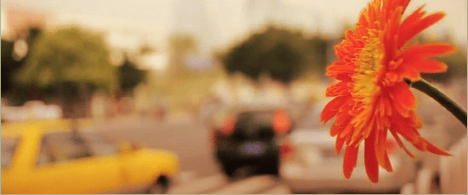 Peaceful orange flower with blurred busy traffic background